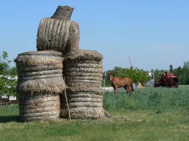 slamený pútač, pasúci sa kôň